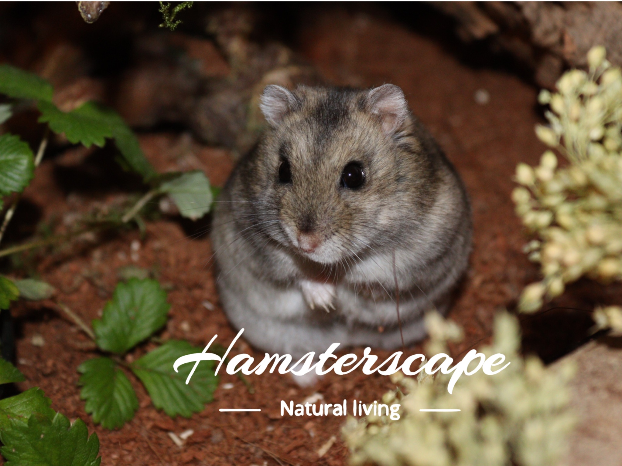 hamsterscape